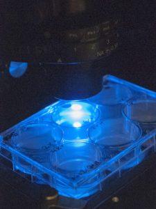 regenerative medicine in magness lab